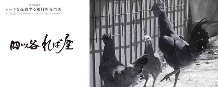四ツ谷 れば屋(ヨツヤレバヤ) - 四谷 - 東京都(鶏料理・焼き鳥)-gooグルメ&料理