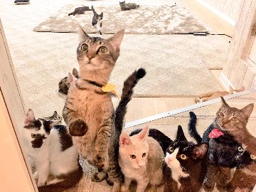 猫カフェ にゃんくる 蒲田店