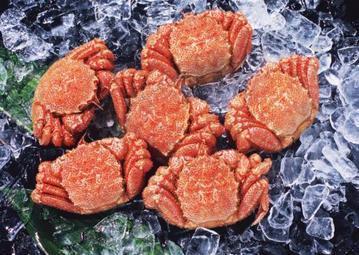 肴や一蓮 蔵(サカナヤイチレンクラ) - すすきの - 北海道(海鮮料理,居酒屋)-gooグルメ&料理