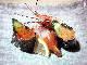 回転寿司 千漁