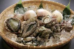 房総半島は、周りを海に囲まれていて魚介類の宝庫です。