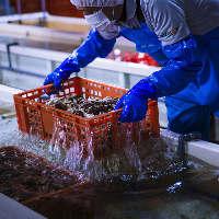 【特許浄化法】 水深384m!富山湾の海洋深層水による特許浄化法