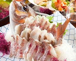 千葉県金谷から直送される 他では味わえない海鮮を堪能!