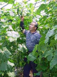 [自家農園野菜] 丹精こめ育てた野菜を朝収穫してお客様の元へ