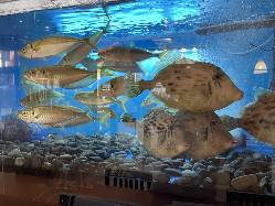 80種以上の日本酒でおもてなし! 少しを沢山飲み比べもあり!