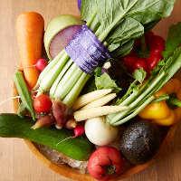 みずみずしい味わいを堪能!船橋の農家より届く採れたての旬野菜