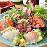 【新鮮】 産地直送朝獲れ鮮魚を存分にお楽しみください