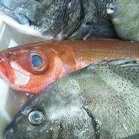 毎日新鮮な三浦半島の魚が!松輪サバやアジなども!