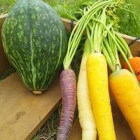新鮮なお野菜を毎日仕入れ!