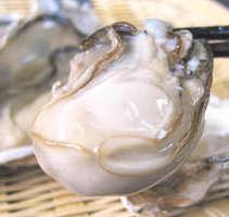 11月~兵庫坂越産牡蠣がスタート