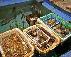 生簀には、新鮮な魚や貝が勢揃い。隣には活イカ専用の生簀も!