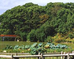 ≪宴席窓外風景≫ お座敷から茶臼山古墳を望めます。