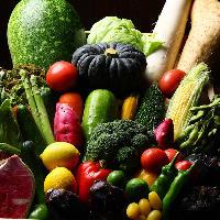 〈旬野菜〉 お野菜も新鮮そのもの!彩り豊かな逸品多数