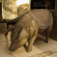 エントランスでは、イベリコ豚のオブジェがお客様をお出迎え