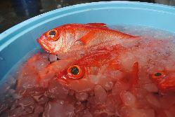 [徹底した仕入れ] 自分たちの目で厳選した直送鮮魚や野菜を使用