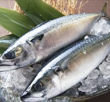 日本海に囲まれた島根県は日本有数の鯖の産地です!