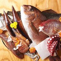 毎日築地から仕入れる魚。野菜にも鮮度をこだわっています!