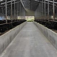牧場では24時間体制で状態を管理しストレスを感じない様に飼育