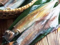 玄海・糸島の釣りもんヤリイカお薦めです。