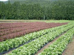 徹底管理で育てた九州産のお野菜をふんだんに使用