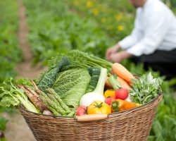 地元糸島半島の野菜は シェフが農園を巡り選びます。