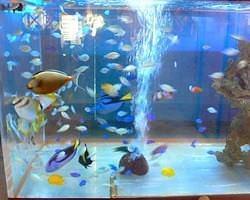 優雅に泳ぐ熱帯魚たちを是非見に来て下さい。