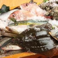 田崎市場直送と天草漁師便の新鮮な魚を厳選。刺身・炙りなど