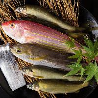 【食 材】 その日仕入れた新鮮な魚をお造りにしてお出しします