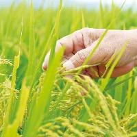 山形県産『はえぬき米』を使用した釜飯は当店の看板商品です!