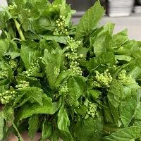広島の山葵菜