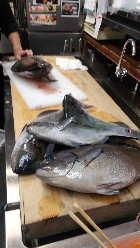 朝一仕入れの魚を調理中