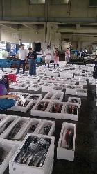 毎朝市場で仕入れる新鮮鮮魚をご堪能ください!