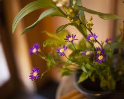 店内に生けられた季節の花々が、心を和ませる。