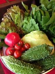 うるま市にある自家農園で採れた島野菜もお楽しみいただけます☆