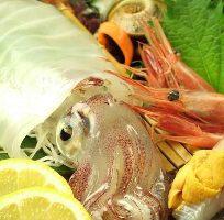 九州直送!新鮮な鮮魚たちをお楽しみ下さいませ。