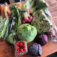 【新鮮お野菜】 お肉・ワインだけではなく食材も新鮮なものを