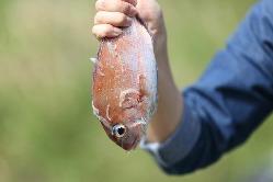 薩摩川内でとれたお魚料理を豊富にご用意!新鮮そのもの
