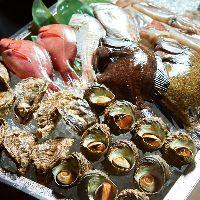 その日仕入れた鮮魚の中からお好きなものをお選びいただけます