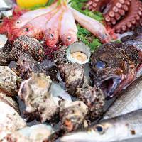 ◆鮮魚◆ 相模湾で水揚げされた鮮度抜群の地魚に舌鼓