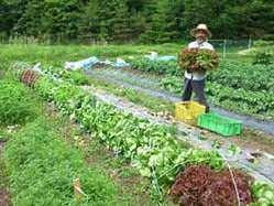 南房総、山梨、蓼科の広大な自家農園で育つ元気な有機野菜たち