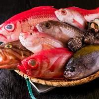 市場で仕入れる旬魚介や漁港から直送で仕入れる新鮮な魚をご提供