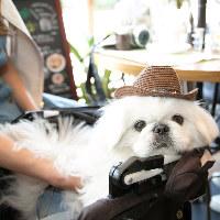 上野で希少!ワンちゃん同伴可テラスで、愛犬と愉しい一時を♪
