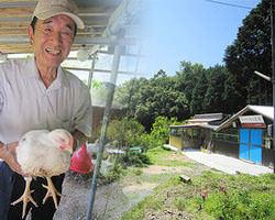 """山口の直営養鶏場""""長門俵山農場"""" 安心・安全な鶏は鮮度抜群!"""