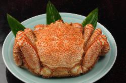 豊洲市場より新鮮な魚を毎日仕入れております