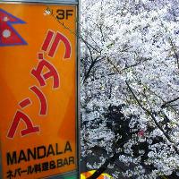 桜並木通りにある店内のどこからでもお花見ができる。