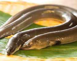 【厳選うなぎ】 旨味たっぷりの鰻を全国から取り揃えております