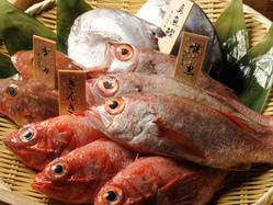 島根から直送の鮮魚。 のど黒はお好きな調理方法で!