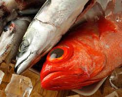 相模湾より直送される鮮魚をご提供!