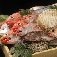 その日獲れた鮮魚や野菜をディスプレイ お好みの調理法でどうぞ