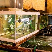 10トンクラスの巨大生け簀や水槽には十数種類の活魚が泳ぎます